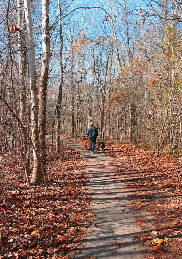 Download Herbst-Weg stockfoto. Bild von bäume, fall, hunde, blätter - 29088