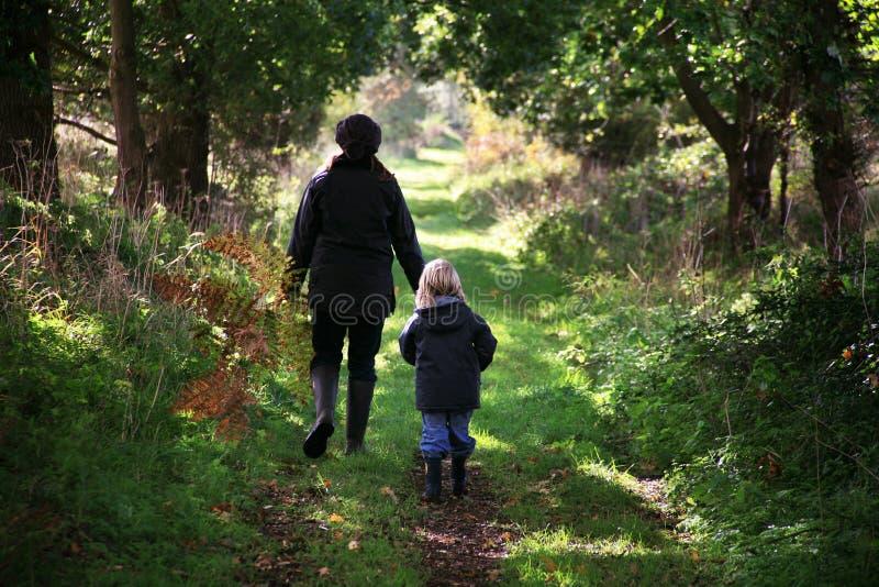 Herbst-Weg im Holz lizenzfreie stockfotografie