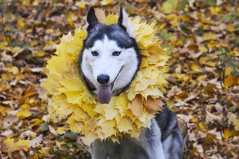 Herbst Weg im Wald mit einem Haustier stockbild