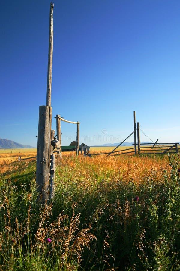 Herbst-Weiden stockbild