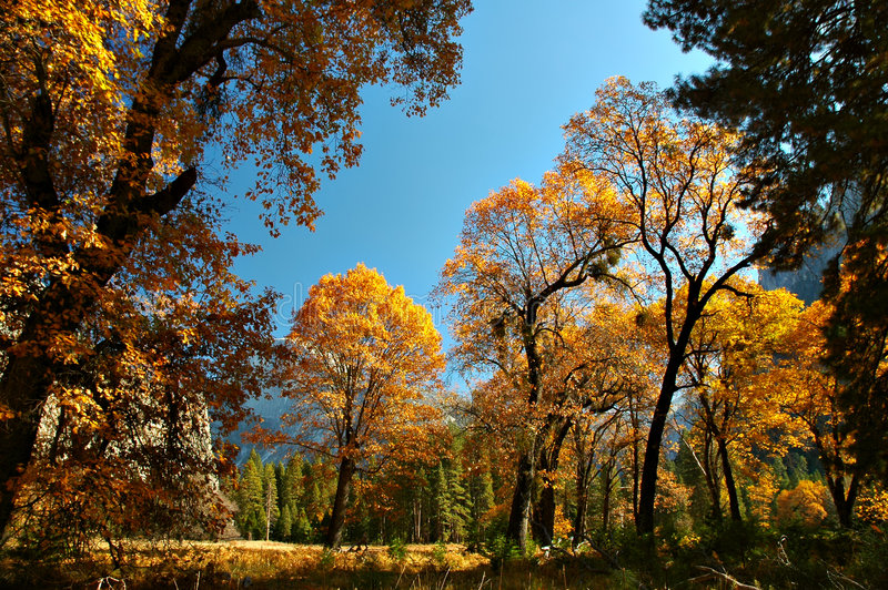 Herbst Yosemite stockfotografie