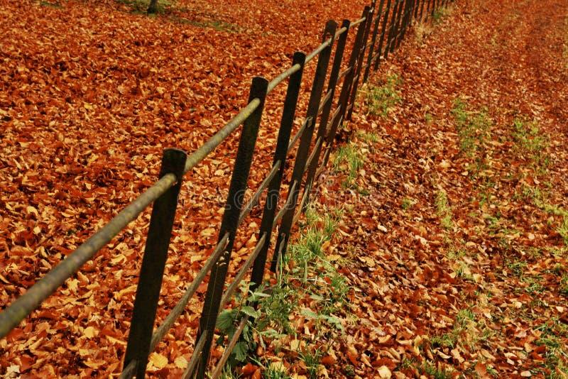 Herbst-Zaun stockfotos