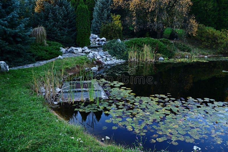 Herbstabend in des Wassers Teich lilly mit alpinem Garten, dekorativen Bäumen und Abflusskanal lizenzfreies stockbild