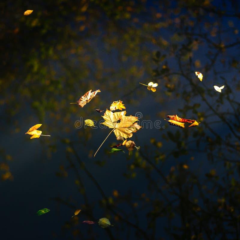 Herbstahornblatt auf dem blauen Seewasser lizenzfreie stockfotos