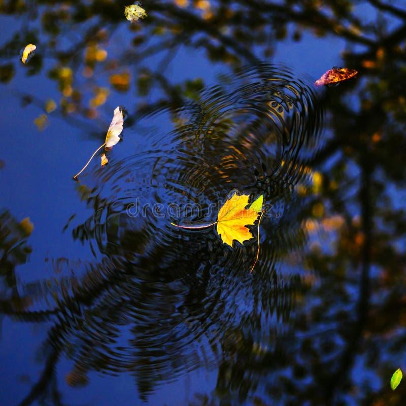 Herbstahornblatt auf dem blauen Seewasser lizenzfreies stockbild