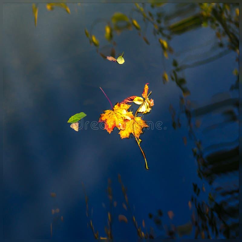 Herbstahornblatt auf dem blauen Seewasser lizenzfreies stockfoto