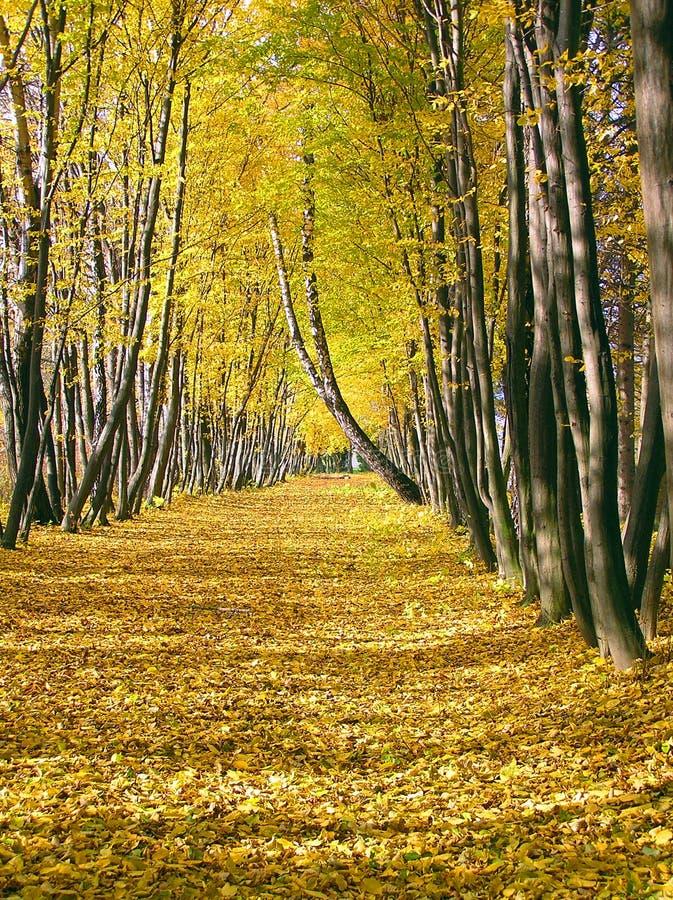 Herbstallee stockfoto