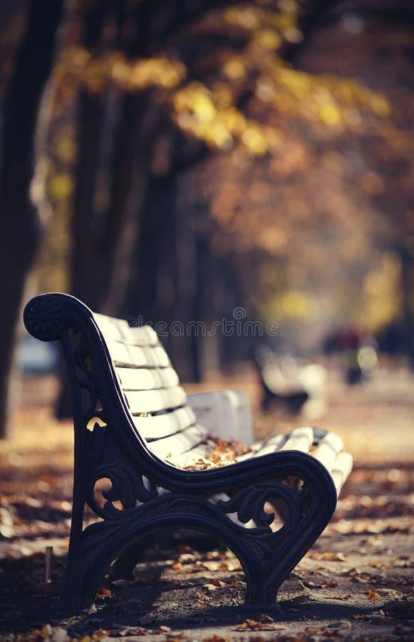 Herbstallee im Park mit weißen Bänke lizenzfreie stockfotos