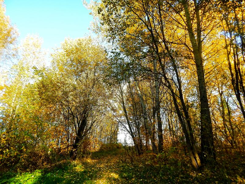 Herbstansicht in den Wald lizenzfreies stockbild
