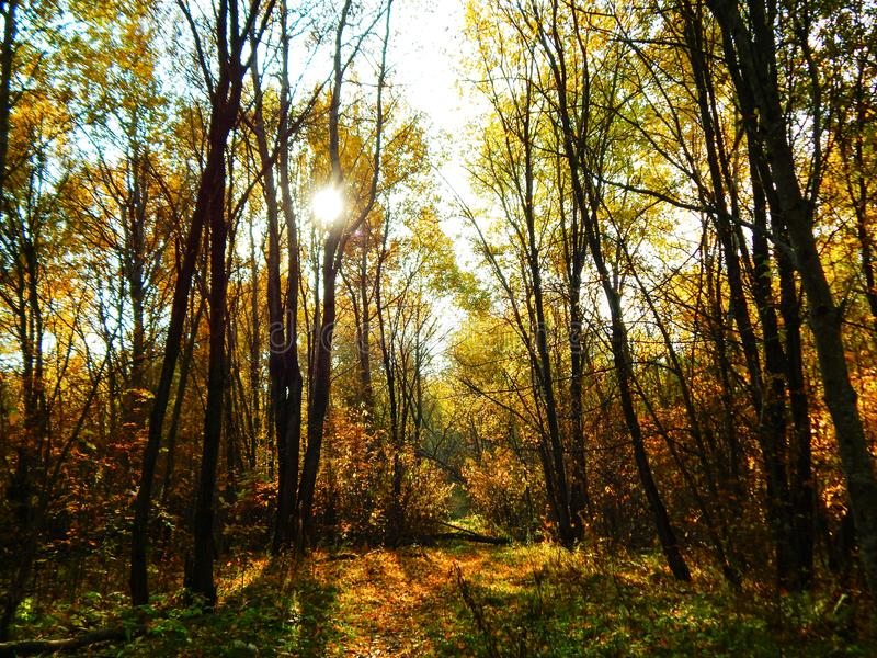 Herbstansicht in den Wald stockfotos