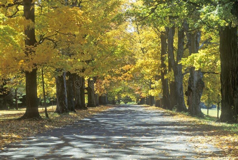 Herbstansicht der Robbins-Landsitzstraße in Annandale, NY lizenzfreies stockfoto