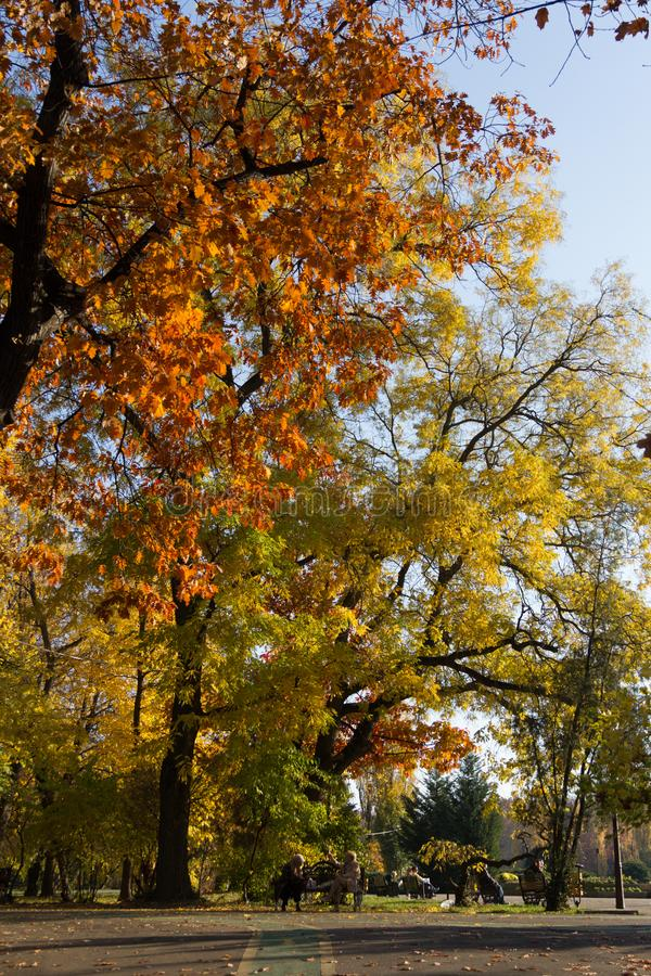 Herbstansicht in Park lizenzfreie stockbilder