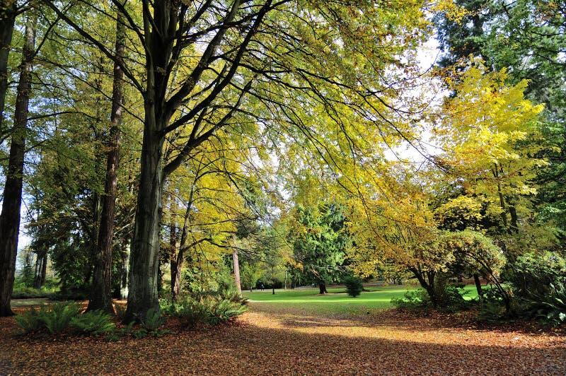 Herbstansicht von Stanley-Park stockfotos