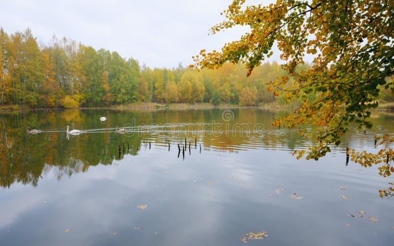 Herbstatmosphäre auf dem See lizenzfreies stockfoto