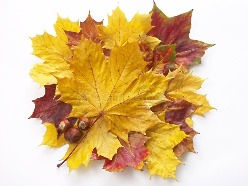 Herbstaufbau stockbilder