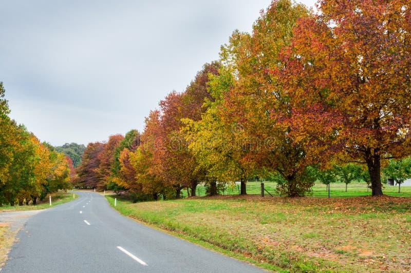 Herbstbäume in Stanley in nordöstlicher Victoria, Australien lizenzfreie stockfotos