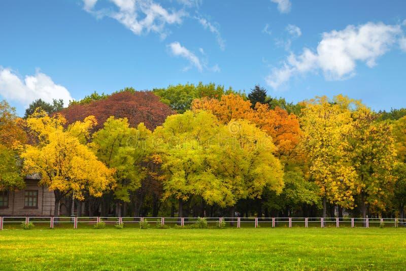 Herbstbäume über dem blauen Himmel stockbild