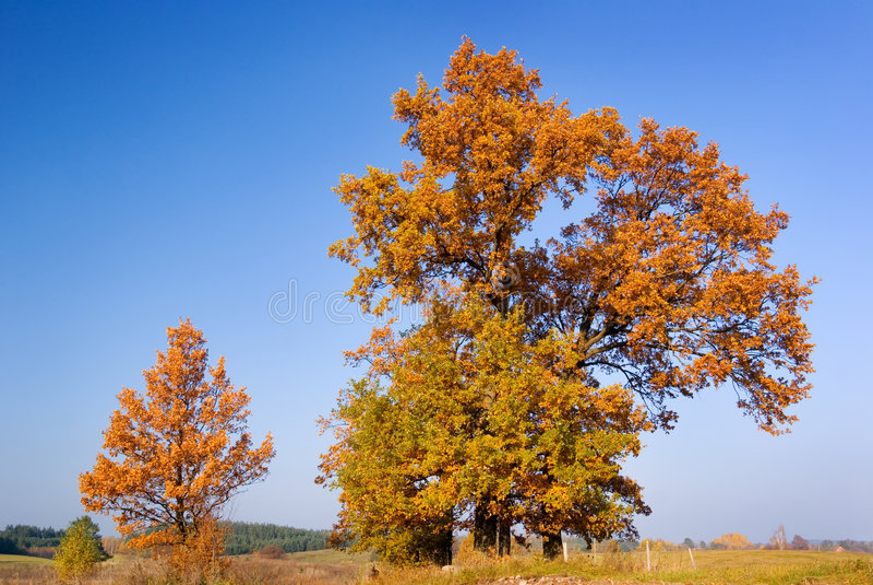 Herbstbäume. stockbilder
