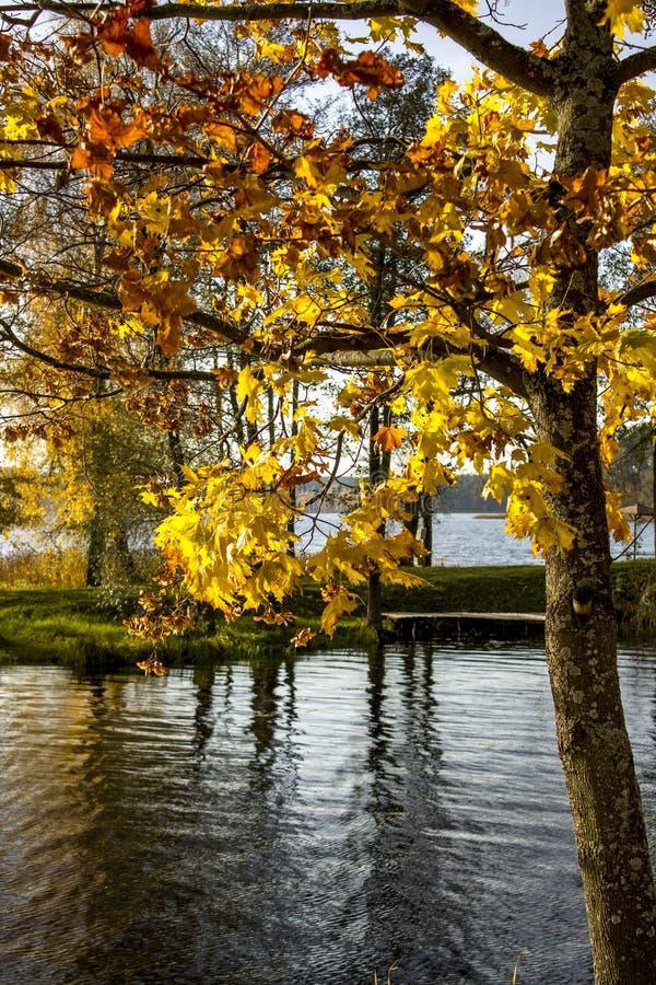 Herbstbäume auf dem See in Litauen lizenzfreies stockfoto