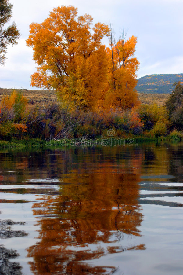 Herbstbäume auf Paddel in Zwickel 2 stockbild