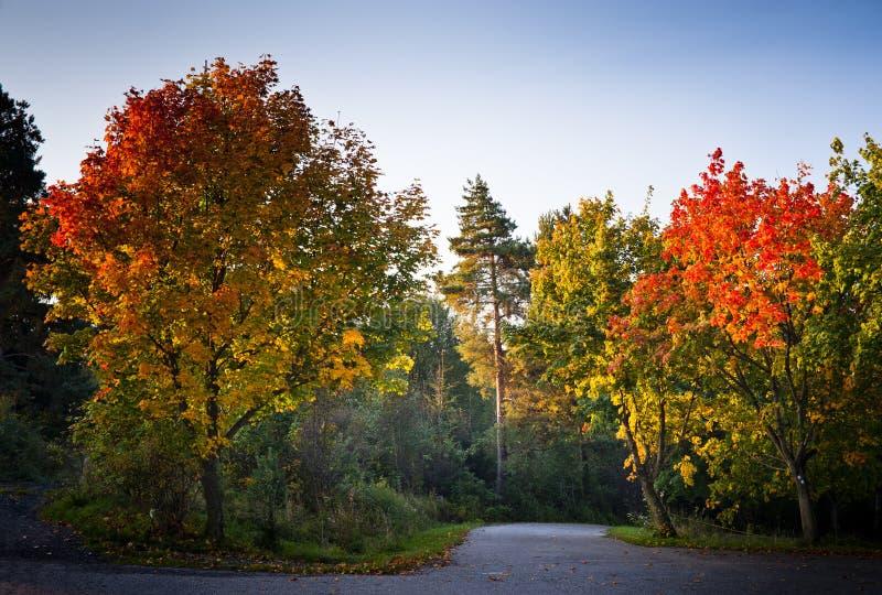 Herbstbäume in der Morgenleuchte stockbild
