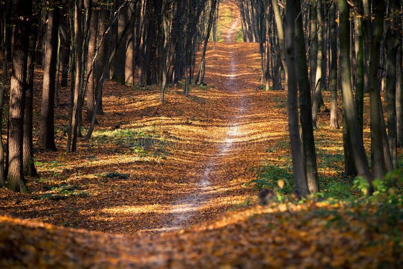 HerbstBäume des Waldes stockbild