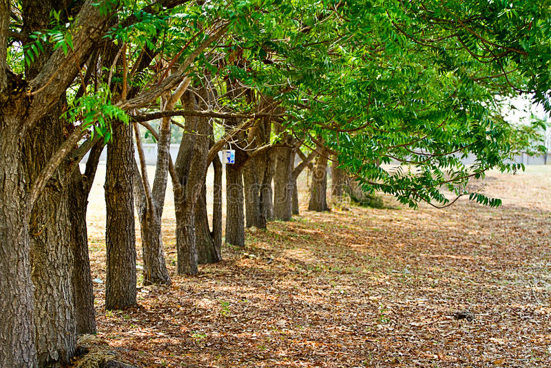 HerbstBäume des Waldes. grünes Holz der Natur stockfotografie