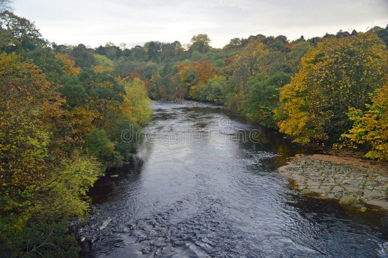 Herbstbäume durch das Fluss swale lizenzfreie stockbilder