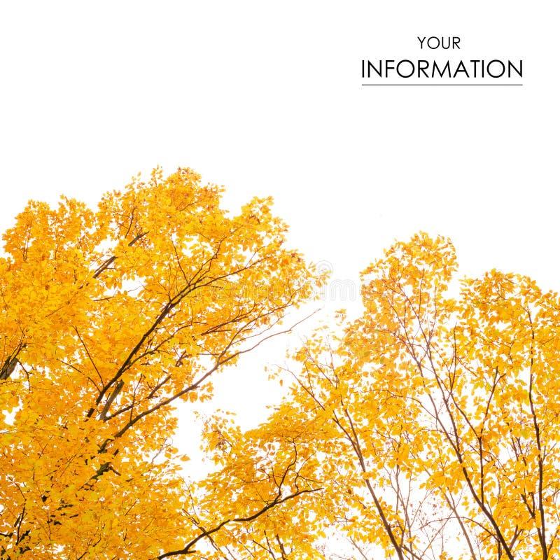 Herbstbäume gestalten Ansicht von gelben roten orange Blättern landschaftlich lizenzfreie stockbilder