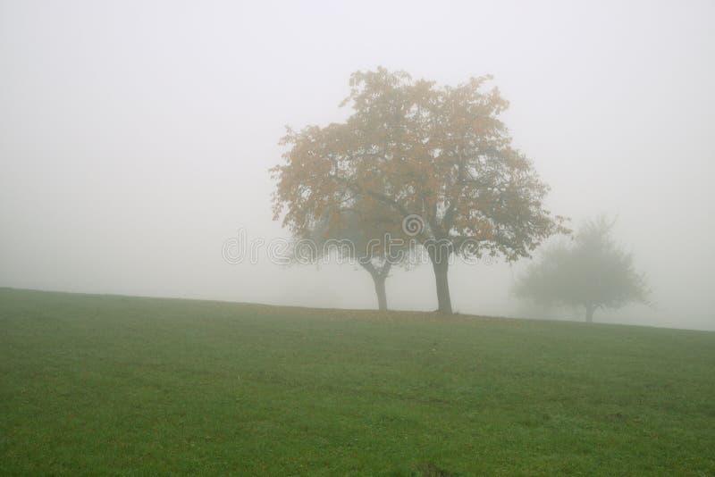 Herbstbäume im dichten Nebel lizenzfreie stockfotos