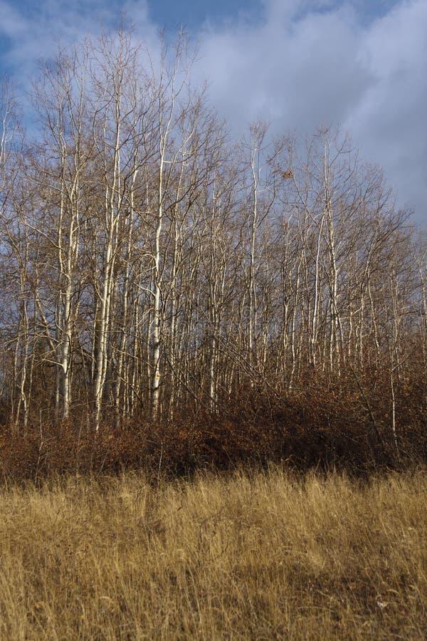 Herbstbäume in Mavrovo stockbilder