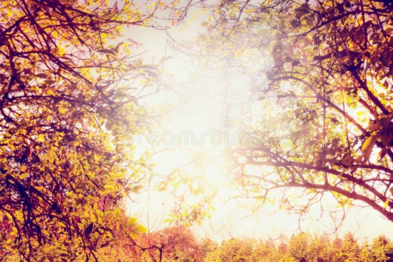 Herbstbäume mit bunten Blättern und Sonne beleuchten, unscharfer Naturhintergrund lizenzfreie stockbilder