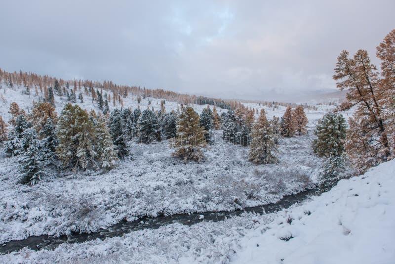 Herbstbäume nach Schneefällen lizenzfreies stockfoto