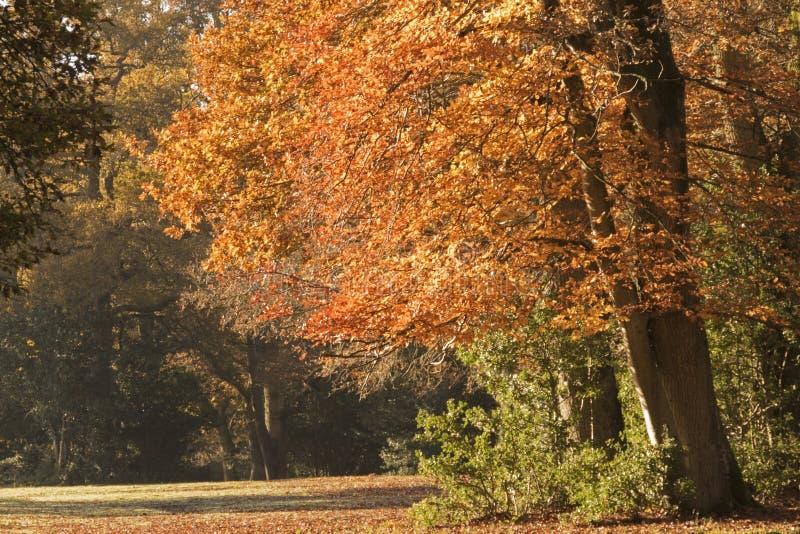 Herbstbäume in neuen Forest Hampshire lizenzfreies stockfoto