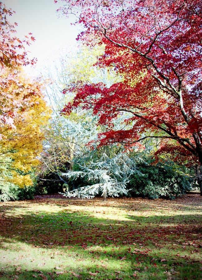 Herbstbäume in Sheffield Gardens Sussex stockfoto