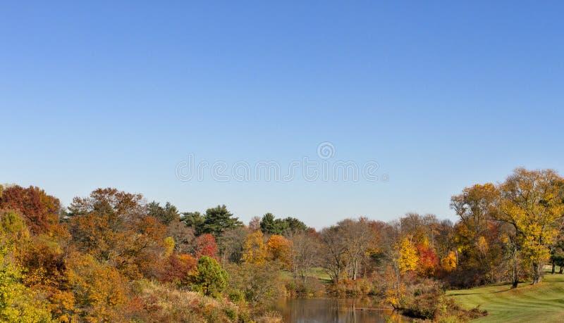 Herbstbäume und -himmel lizenzfreies stockfoto