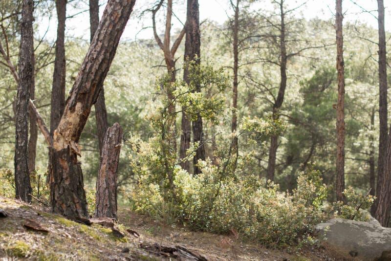 HerbstB?ume des Waldes Gr?ne h?lzerne Sonnenlichthintergr?nde der Natur Schönheit, orange stockbild
