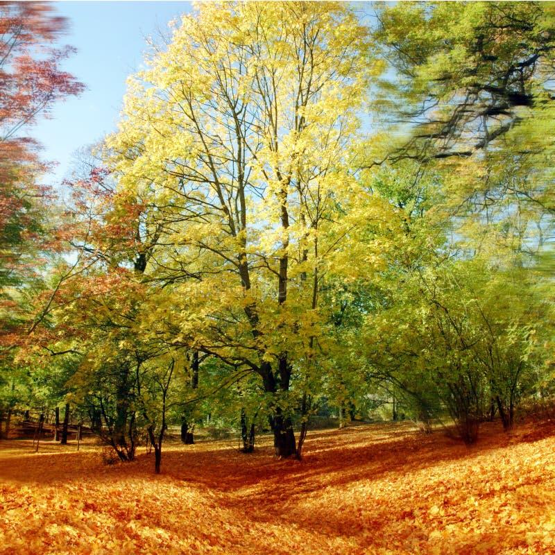 Herbstbaum stockfotografie