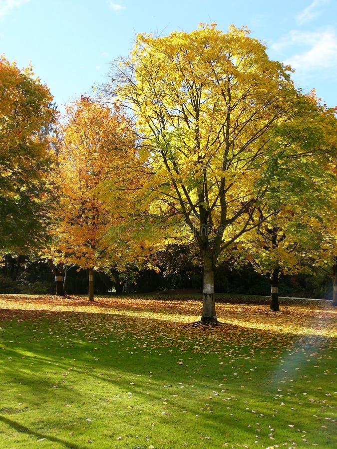 Herbstbaum lizenzfreies stockbild