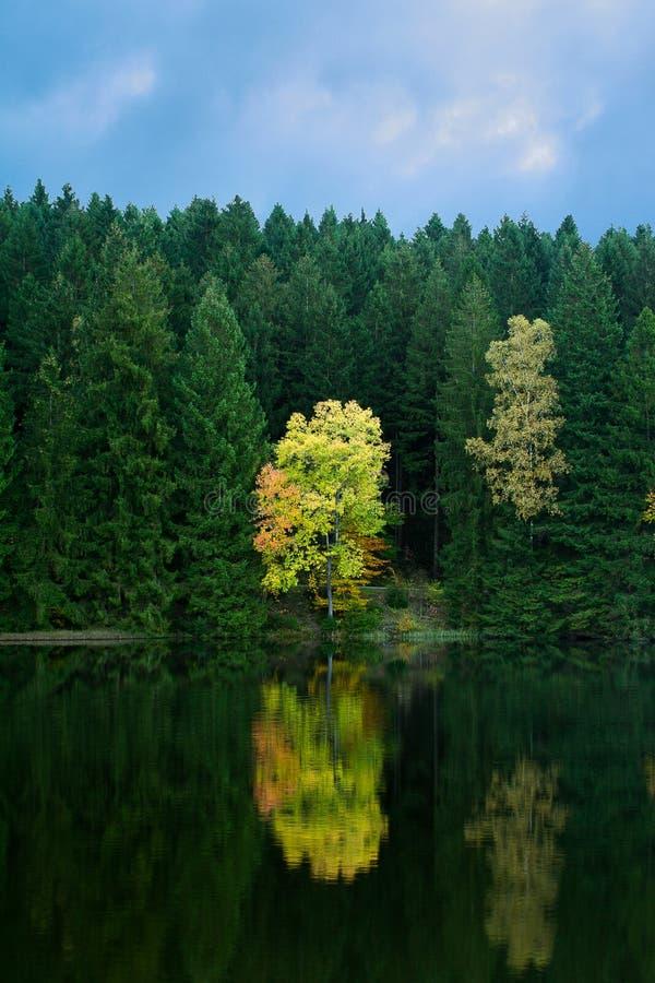 Herbstbaum auf der Küste des Sees lizenzfreie stockfotos