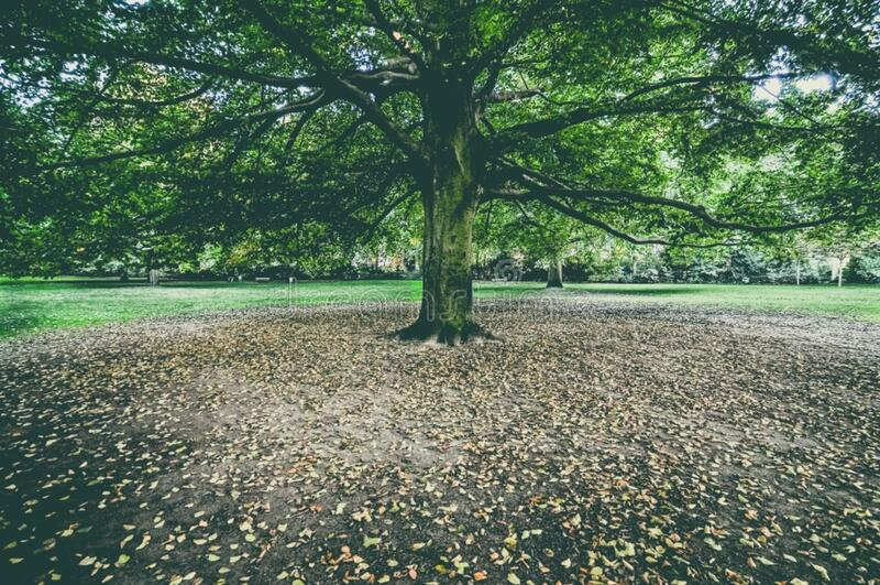 Herbstbaum im Park lizenzfreie stockbilder