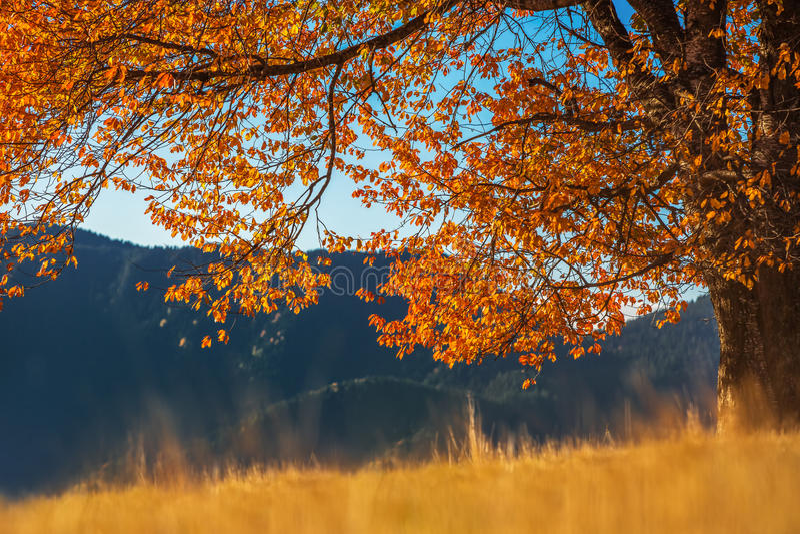 Herbstbaum, Morgenschuß lizenzfreie stockfotografie