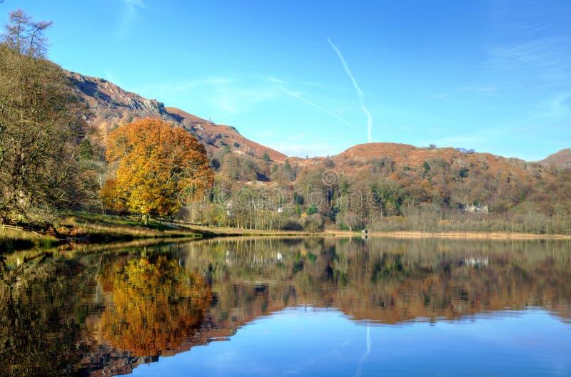 Herbstbaum reflektiert in Grasmere stockfoto