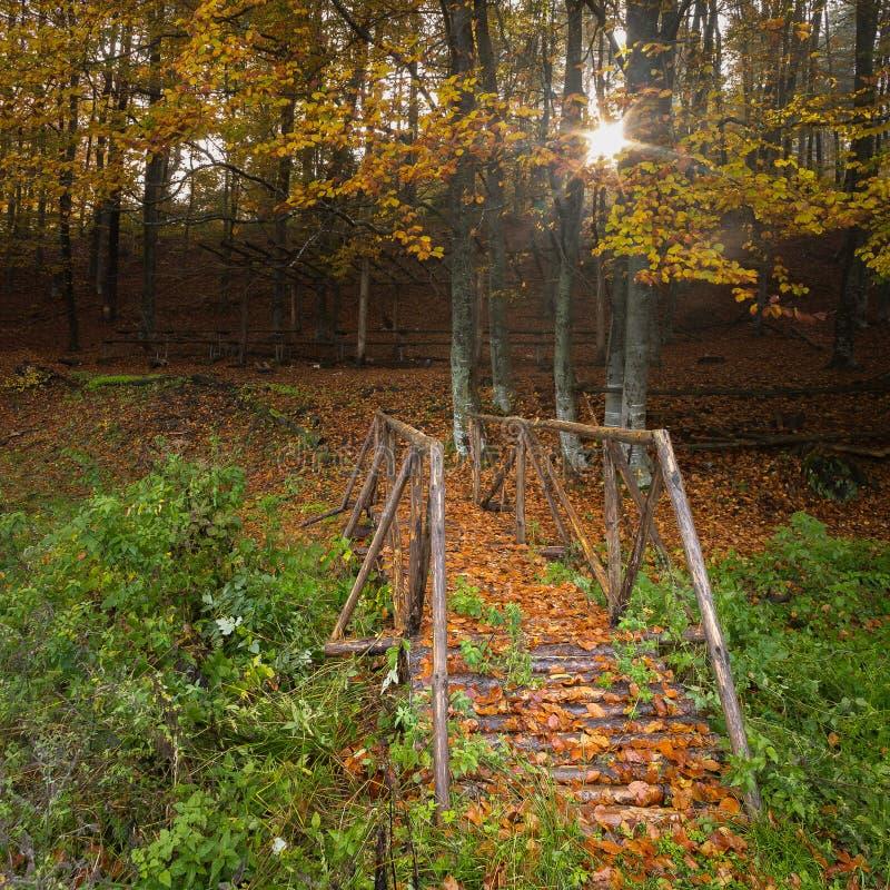 Herbstbaumbrücke stockfotografie