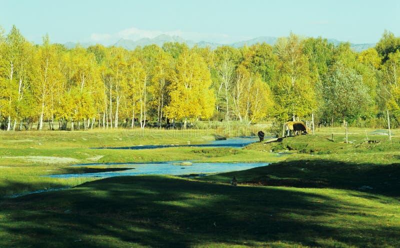 Herbstbaumhintergrund lizenzfreies stockfoto