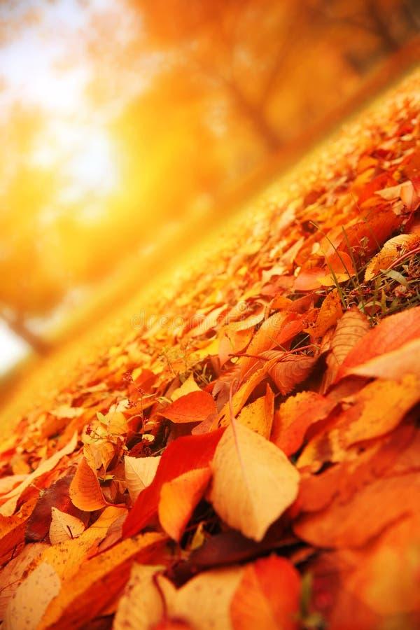 Herbstbaumpark stockfoto
