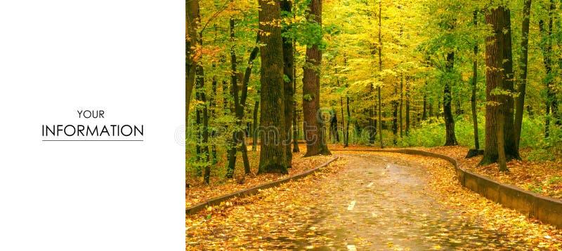 Herbstbaumstraßen-Landschaftsansicht der gelben roten Orange verlässt lizenzfreie stockbilder