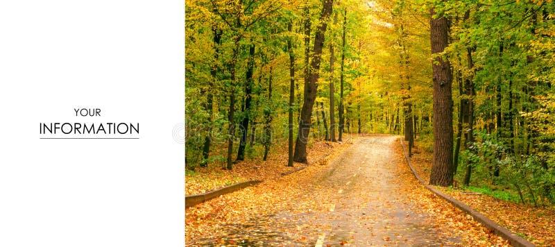 Herbstbaumstraßen-Landschaftsansicht der gelben roten Orange verlässt stockbild