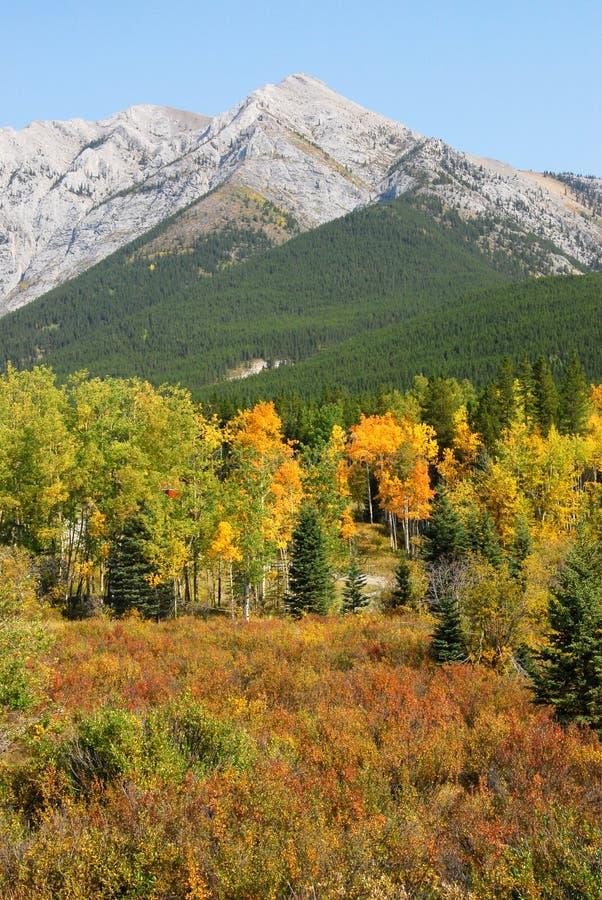 Herbstberge und -wälder lizenzfreie stockfotos