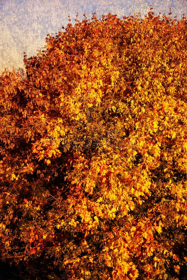 Herbstbeschaffenheit von Kolomenskoye-Park in Moskau collage lizenzfreie stockfotografie